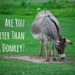 Weekly Wisdom: Are You Smarter than a Donkey?